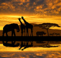 Silhouette elephant,giraffes,rhino and zebras Royalty Free Stock Photo