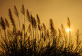 Silhouette Grass At Sunset