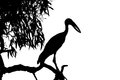 Silhouette heron standing in black and white scene on the tree top Royalty Free Stock Image