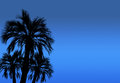 Silhouette of high palm trees with night sky background. Royalty Free Stock Photo