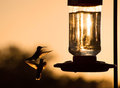 Silhouette of a Hummingbird hovering Stock Images