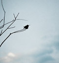 Silhouette of Hummingbird Royalty Free Stock Photo