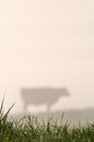 Silhouette of jersey cow and pasture west coast new zealand Royalty Free Stock Photo