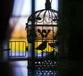 Silhouette of the little bird in a cage on the background of the window with curtains black Stock Photography