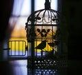 Silhouette Of The Little Bird ...