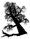 Silhouette of the old dried tree isolated on white background Stock Image