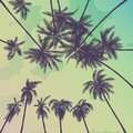 Silhouette palm tree in flat icon design at sunset with vintage filter background vector