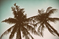 Silhouette palm tree in vintage filter background Royalty Free Stock Photo