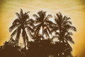 Silhouette palm tree with vintage filter background Royalty Free Stock Photo
