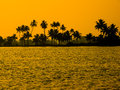 Silhouette of palm trees in india kerala Royalty Free Stock Image