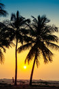 Silhouette of palm trees at the seashore in sri lanka Stock Photo