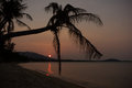 Silhouette of palm trees during sunset at koh samui thailand the maenam beach Royalty Free Stock Photography