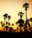 Silhouette of palm trees in Thailand Royalty Free Stock Image