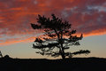 Silhouette of pine trees tree against an amazing sunset photographed in the crimean mountains Stock Photo