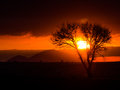 Silhouette scene of sunset between dead tree selective focus with bird flying Stock Image
