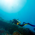 Silhouette of Scuba Diver near Sea Bottom Stock Photography
