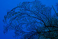 Silhouette of Sea Fan Stock Image