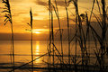 Silhouette of sea oats at hangar beach in florida Royalty Free Stock Image