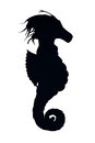 Silhouette of a seahorse over white background Royalty Free Stock Image