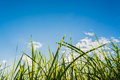 silhouette shot image of Grass and sky in shiny day. Royalty Free Stock Photo