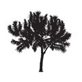 Silhouette of the southern pine on a white background
