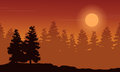 Silhouette of spruce forest at sunset scenery
