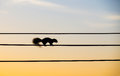 Silhouette squirrel walking on the electric wire Royalty Free Stock Photo