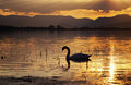 Silhouette Of Swan On Lake