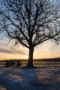 Silhouette tree and bench behind a table single the sun rises Stock Photo