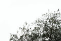 Silhouette of a tree with birds, copyspace on the sky Royalty Free Stock Photo
