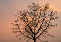 Silhouette tree branch in sunset on orange sky Stock Images
