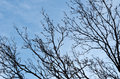 Silhouette of tree branches against blue clear sky