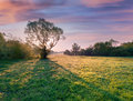Silhouette of the tree at dawn spring meadow in morning sunlight Royalty Free Stock Photography
