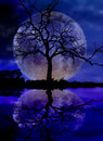 Silhouette tree front moon water reflection over lake Royalty Free Stock Images