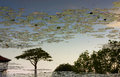 Silhouette of tree reflection on a pond single Royalty Free Stock Image