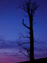 Silhouette tree at sunset a dead is silhouettes against a colorful sky over wallowa lake oregon Stock Photo