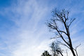 Silhouette tree under blue sky Royalty Free Stock Photo