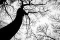 Silhouette of tree in winter leafless Royalty Free Stock Image