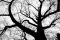 Silhouette of tree in winter leafless Stock Photos