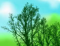 Silhouette trees on natural background abstract Stock Photo