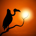 The silhouette of a vulture sunset Royalty Free Stock Photo