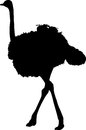 Silhouette of a walking ostrich
