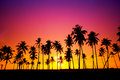 Silhouetted of coconut tree Royalty Free Stock Photo