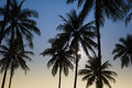 Silhouetted of coconut tree during sunset Stock Photos