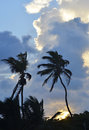 Silhouetted Palms in San Pedro, Belize Royalty Free Stock Photo
