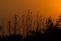 Silhouetted trees sunset with thailand Stock Photos