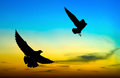 Silhouetted two seagull flying at sunset Royalty Free Stock Photo