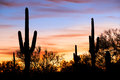 Silhouetten in desert saguaro against red sky Royalty Free Stock Image