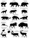 Silhouettes of animals of Eurasia.