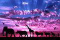 Silhouettes of animals on purple cloudy sunset Royalty Free Stock Photo